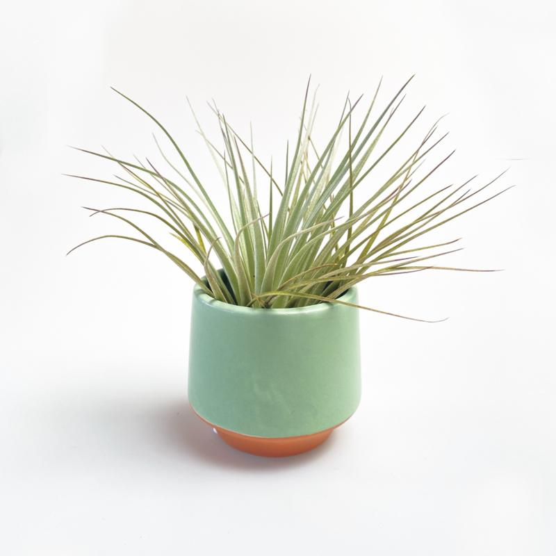 Groen/terra potje klein + airplant