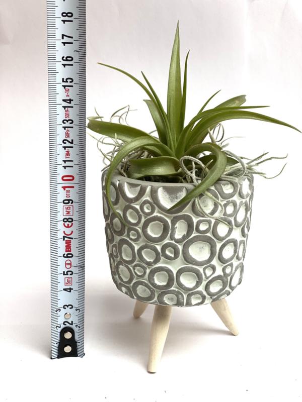 Cementpotje (groene rondjes) met poten & airplant
