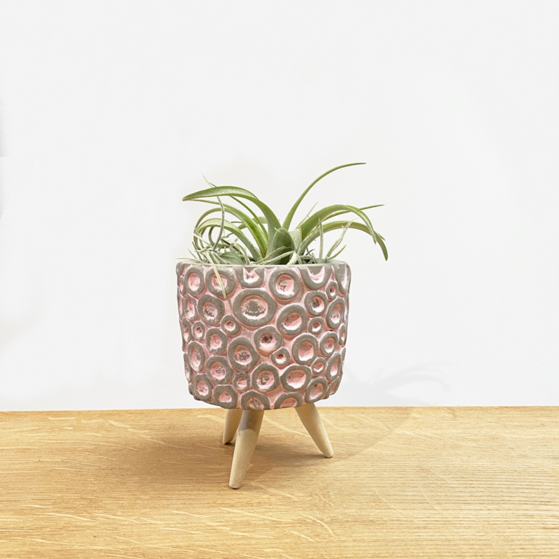 Cementpotje (roze rondjes) met poten & airplant