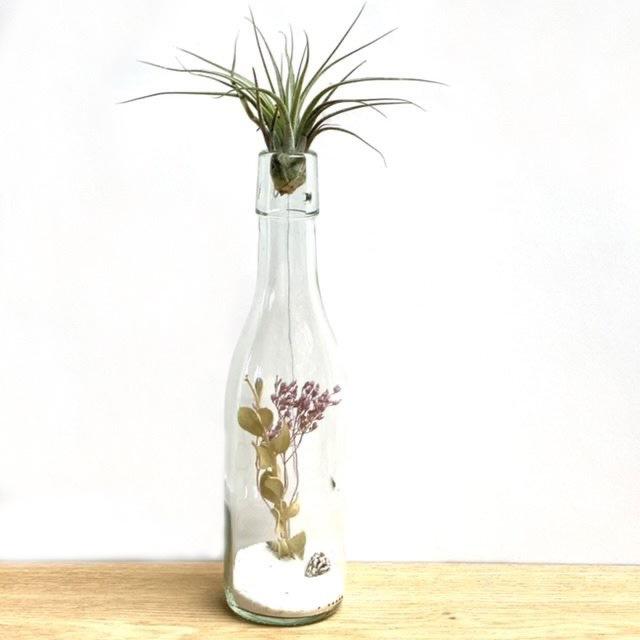 Flasche mit getrockneten Blumen, Ionantha Scaposa
