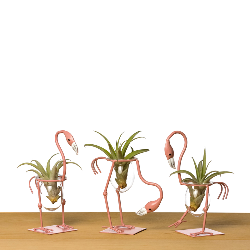 Flamingo + airplant (set van 3)