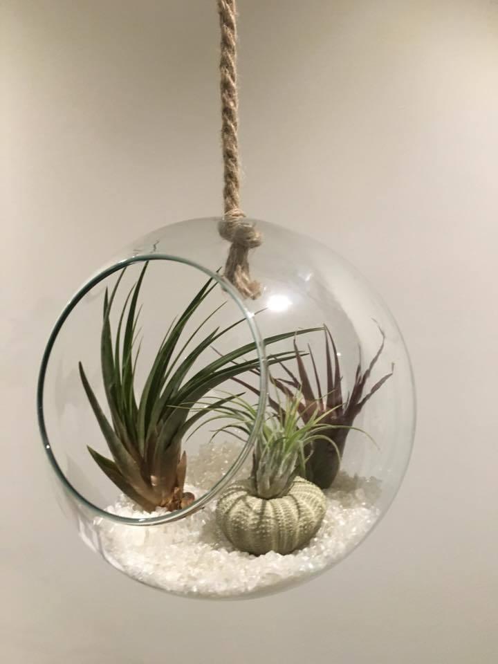 luchtplantjes in glazen bol
