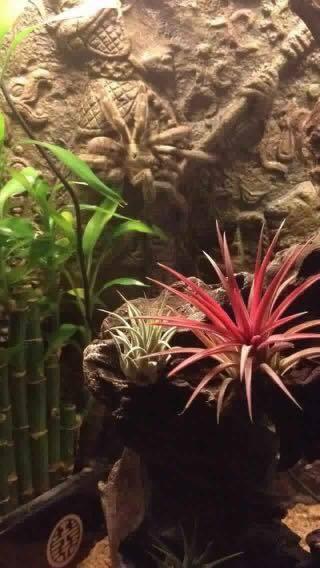 Paludarium plantjes