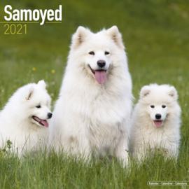 Samojeed