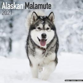 Alaskan mulamute