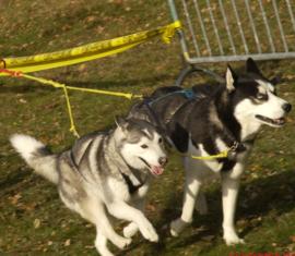 PE Treklijnen 1 of 2 honden