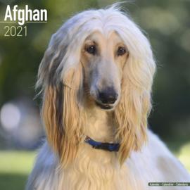 Afghaanse windhond