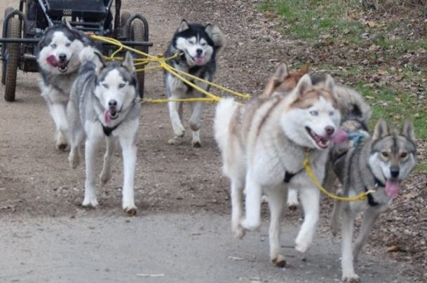 Verlenging treklijn ( leaddogsectie)