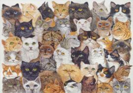 Pat Scott - Katten