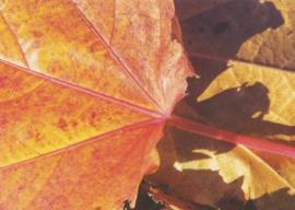 Angelika Dietschi - Herfst blad