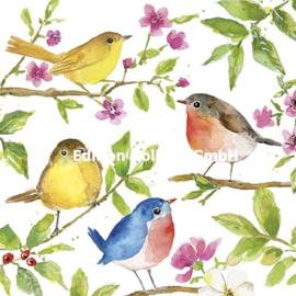 Carola Pabst - Vogeltjes