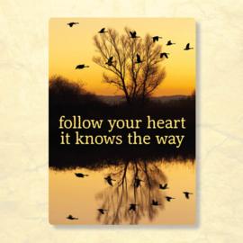 ZintenZ - Follow your heart
