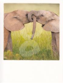 PolaCard - Olifanten liefde