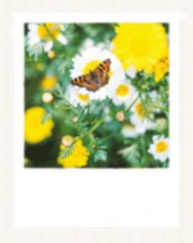 Charlotte Harrison  - Butterfly in Spring