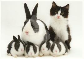 Getty Images -  Kat met konijnen