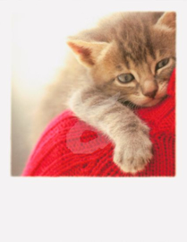 Aifos - Kattenknuffel
