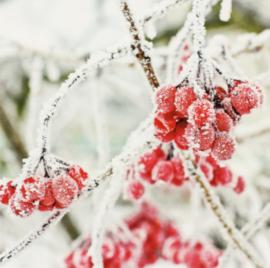 Roman - Winter