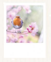 Ray Hennessy  - Bird