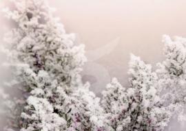 FotoEigenArt - Tak met ijs en sneeuw