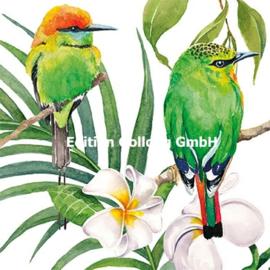 Carola Pabst - Twee vogels