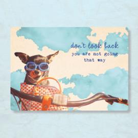 ZintenZ - Don't look back