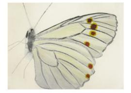 Renate Kuby - Kleine vlinder II