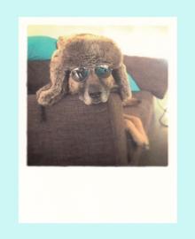 EyeEm - Hond met bril
