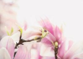FotoEigenArt - Magnoliatakken