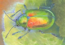 Loes Botman - Klein Insectenboek 1