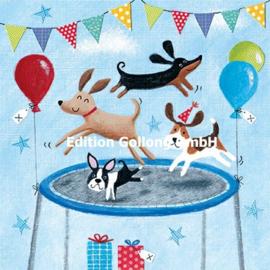 Advocate Art - Honden op de trampoline