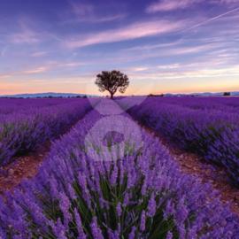 Shutterstock / Anton Gvozdikov - Lavendelveld