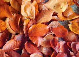 Angelika Dietschi - Herfst bladeren