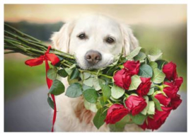 Gabi Stickler - Hond met rode rozen