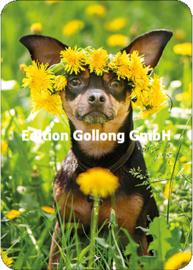 AdobeStock - Hond met bloemenkrans