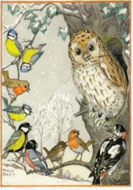 Molly Brett - Uil met verschillende vogels
