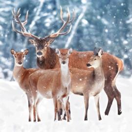 Delbars  -  In de sneeuw