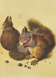 Albrecht Dürer - Eekhoorn