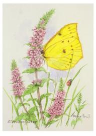 Helga Preiß - Citroenvlinder