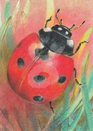 Loes Botman - Klein Insectenboek 2