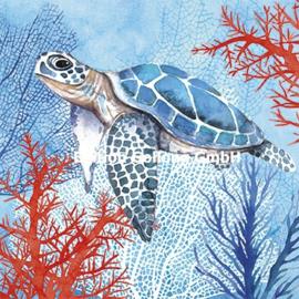 Carola Pabst - Schildpad