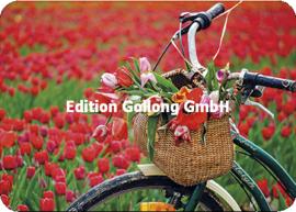 Adobe Stock / Minichka - Fietsen door de tulpenvelden