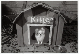 Editions du Désastre - Beware of Small Killer Dog