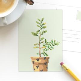 Studio Draak - 'Groen en groei' versie groen