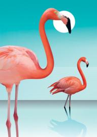 Dsa - Flamingo's