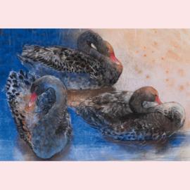 Loes Botman  - Drie zwarte zwanen