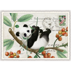 Edition Tausendschön  -  Panda