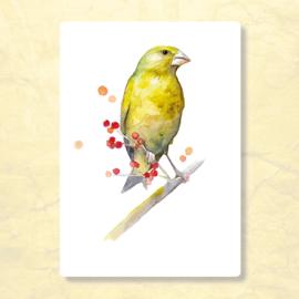Veer Illustratie - Vogel