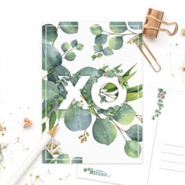 Studio Draak - 'Fijne flora' Eucalyptus