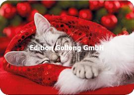 Shutterstock - Kat met kerstmuts
