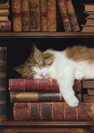 Nora Good - Slapende kat in boekenkast